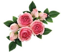 E-naturalne hydrolat woda kwiatowa z kwiatów róży damasceńskiej ecocert 100g