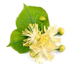 ZSK Naturalny olejek z drzewa herbacianego, 7ml