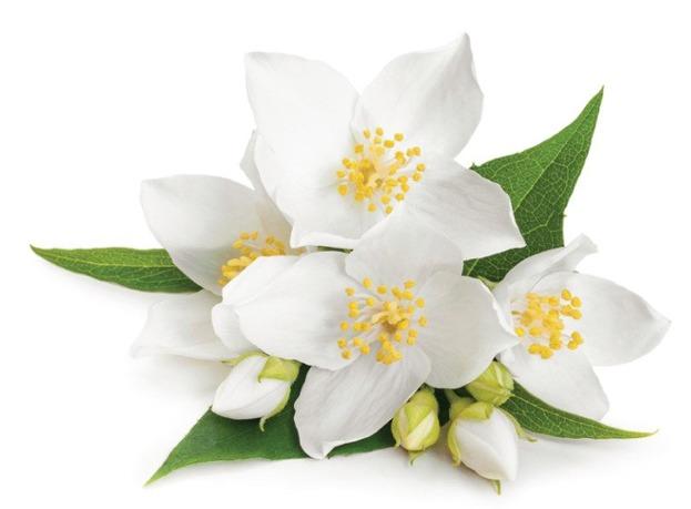 E-naturalne Hydrolat z kwiatów jaśminu 100g